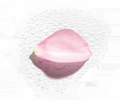 Hidrolato de Rosa Biológica